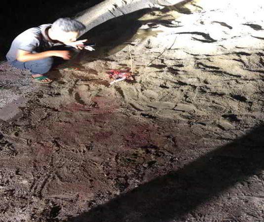 Bé trai 7 tuổi bị cả đàn chó cắn tử vong ở Hưng Yên