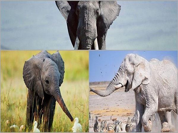 Giải mã giấc mơ thấy con voi