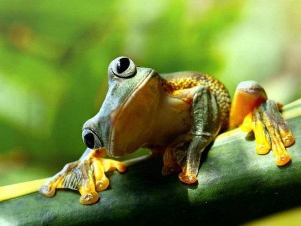Mơ thấy ếch là điềm dữ hay lành - Đánh con số nào?