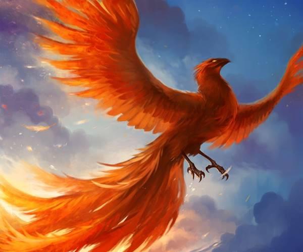 Giải mã giấc mơ thấy chim phượng hoàng là điềm báo gì