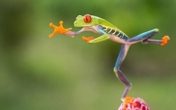 Giải mã giấc mơ thấy con ếch