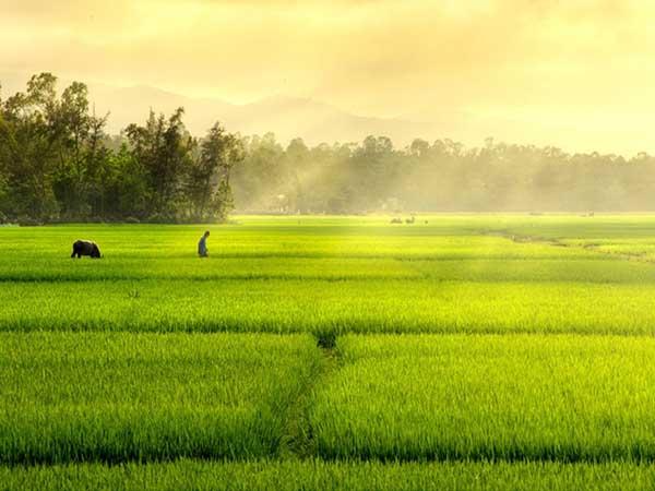 Nằm mơ thấy cánh đồng đánh con gì ăn chắc dễ trúng