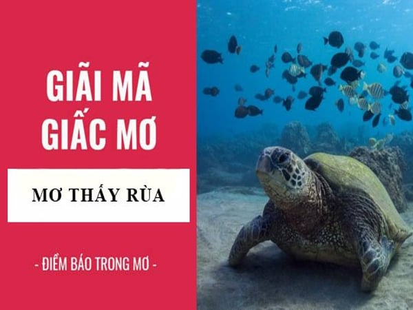 Mơ thấy con rùa điềm báo lành hay dữ?