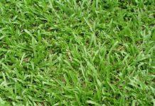 Mơ thấy cỏ điềm báo gì đánh số gì