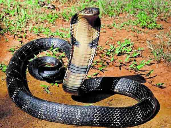 Nằm mơ thấy rắn cắn đánh con gì, có điềm báo gì