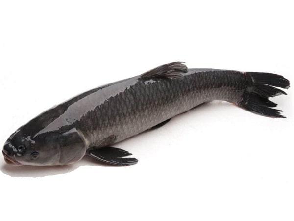 Mơ thấy cá trắm điềm báo tốt hay xấu?