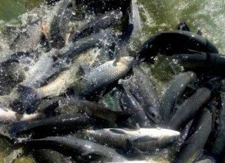 Nằm mơ thấy cá đen đánh số mấy?